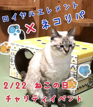 2/22【告知】ネコリパブリックxロイヤルエレメント講座〜肉級〜開催のお知らせ